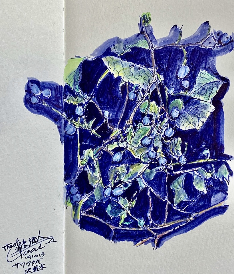 Sapphire-berry