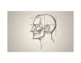 study of skull, A