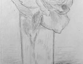Sketch of the rose