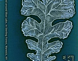 white-oak leaf