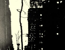 a tree withers in Manhattan