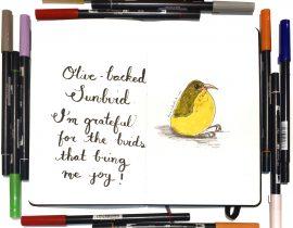 Suzie the sunbird