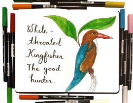 Kelly the Kingfisher