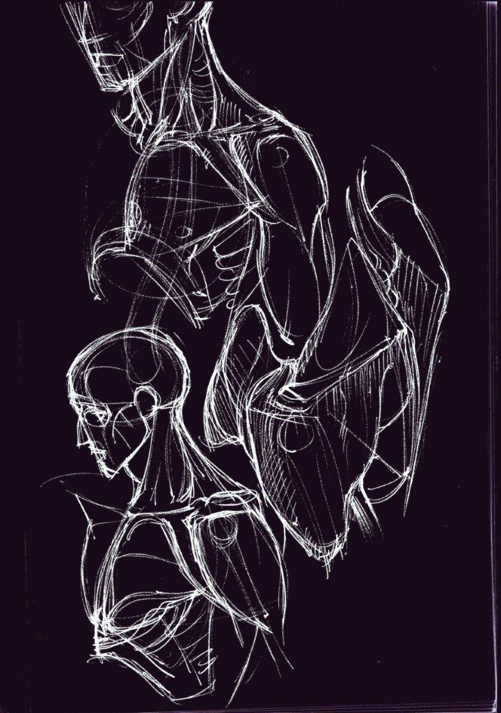 anatomy and tension