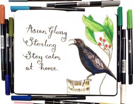 Asian Starling