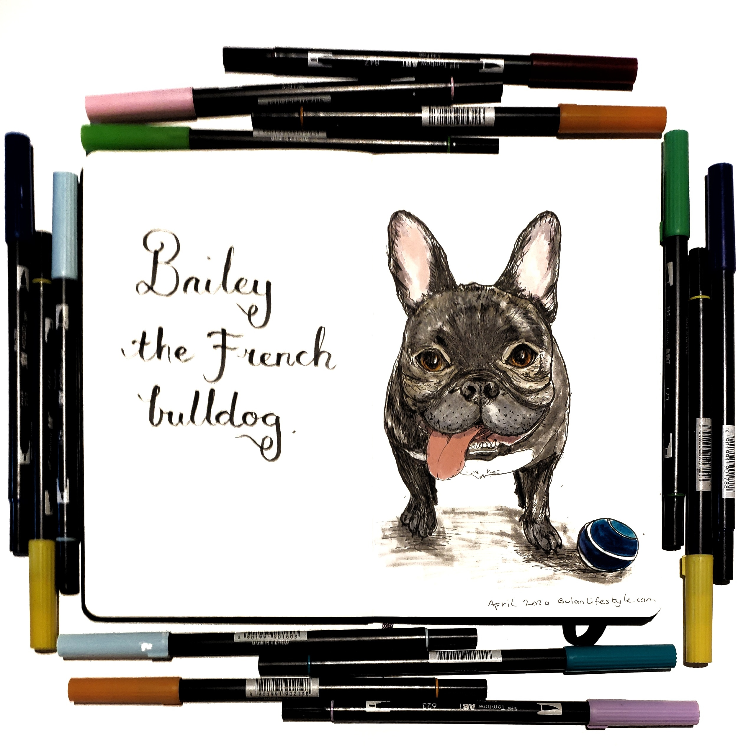 Bailey the French bulldog