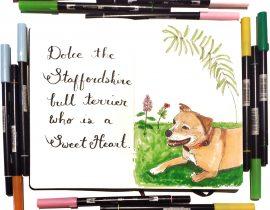 Pet Portraits : Dolce the Staffy
