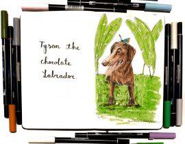 Tyson the chocolate labrador