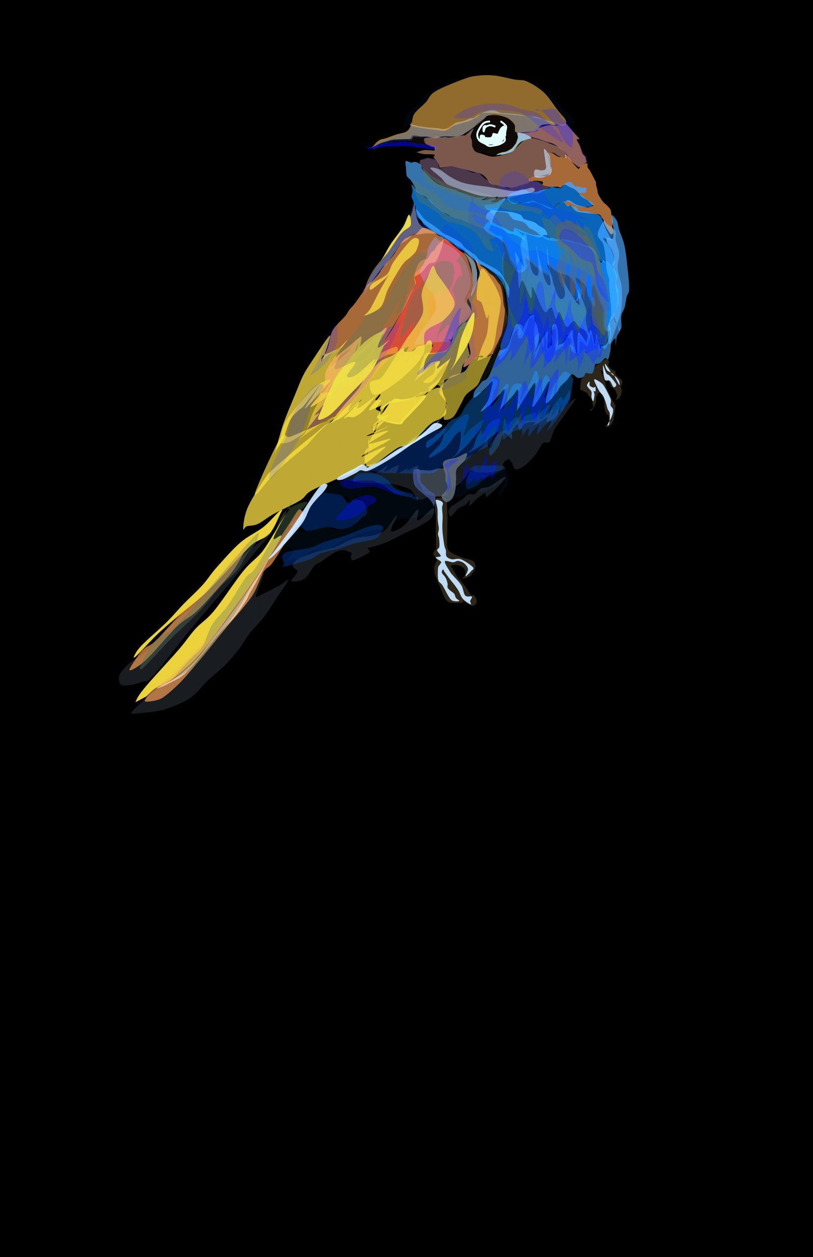 eastern bluebird  |  negative coloring