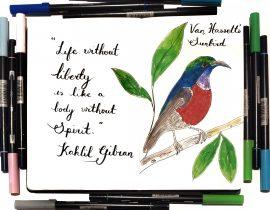 Van Hasset's Sunbird