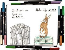 Nala the rabbit
