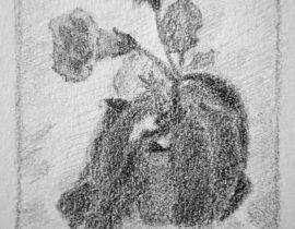 Sketch of gloxinia