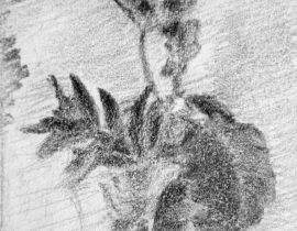 Sketch of the flower