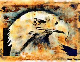bald eagle in wait