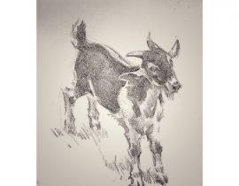 a goat alone