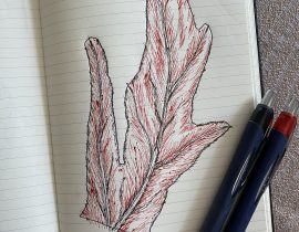 monstera deliciosa, leaf detail