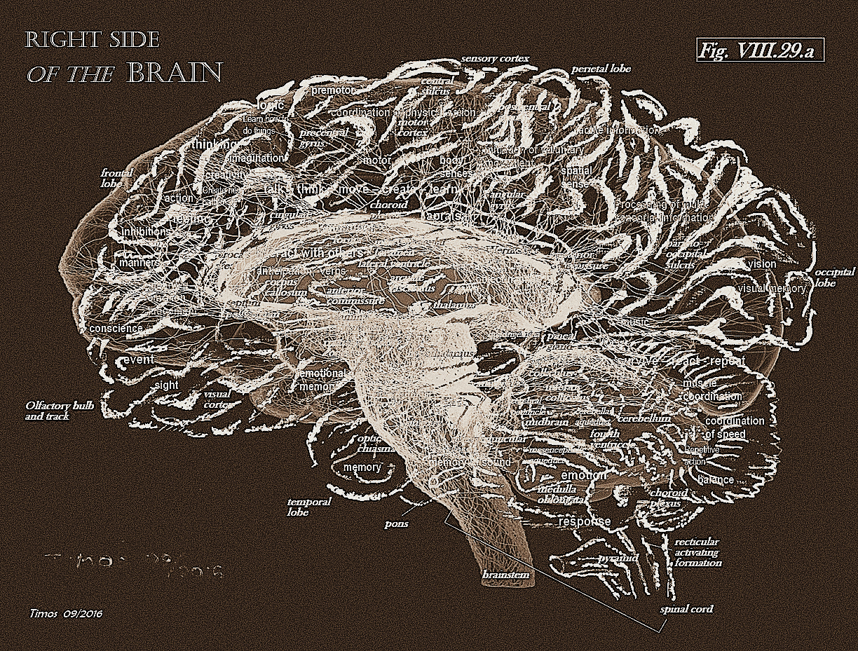 brain and emotion