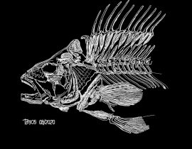 fish skeleton {piece by piece}