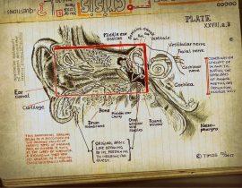ear anatomy | aug 07 2020