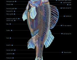 fish | knowing what is what