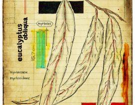 graecum botanicus patria | plate III