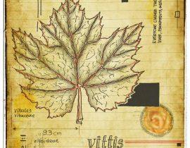 graecum botanicus patria | plate V