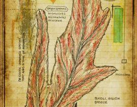 graecum botanicus patria | plate VI