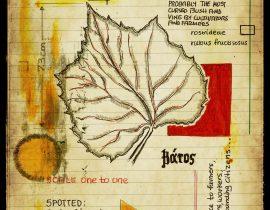 graecum botanicus patria | plate VIII