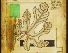 graecum botanicus patria | plate VII