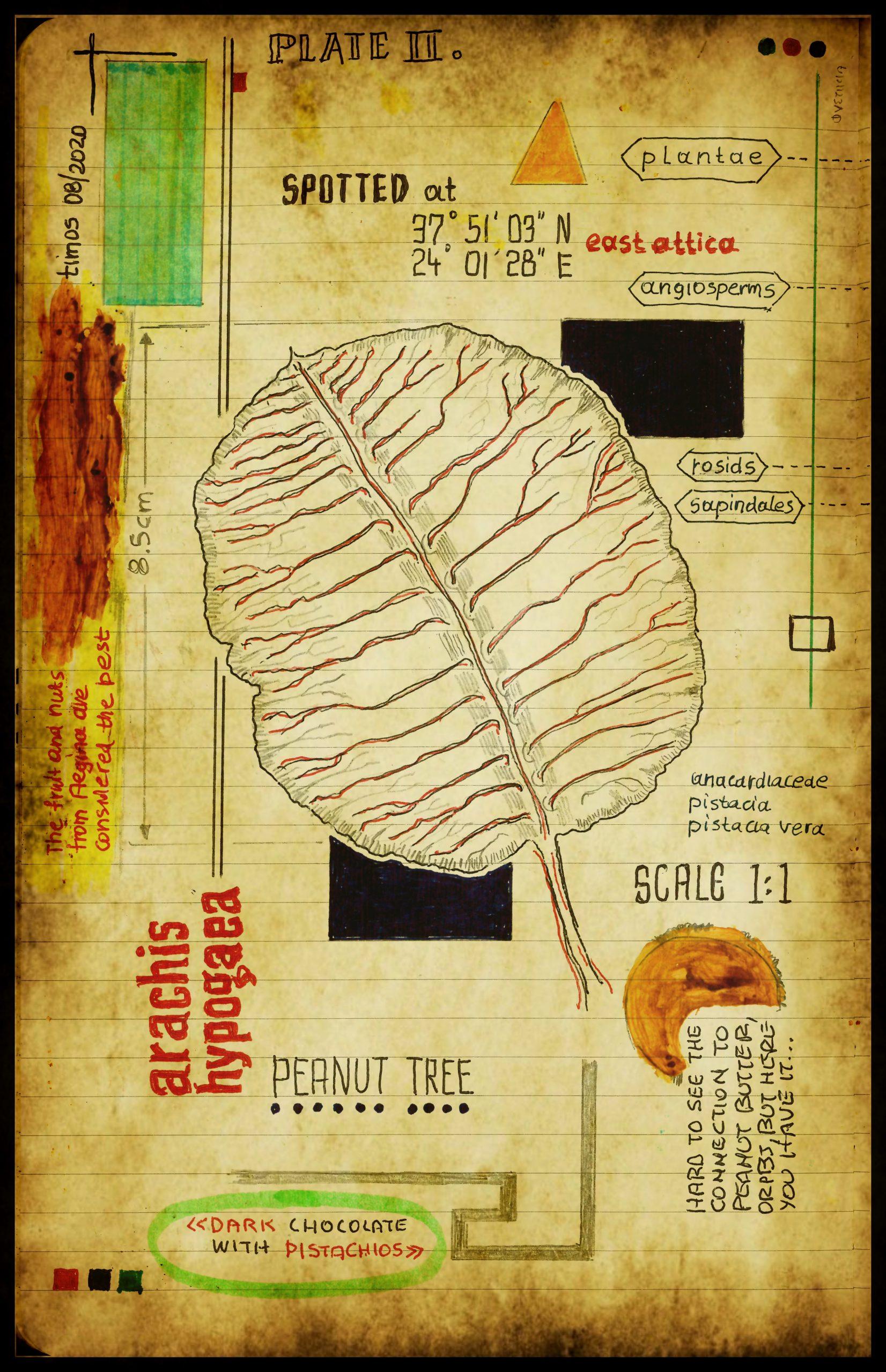graecum botanicus patria | plate II