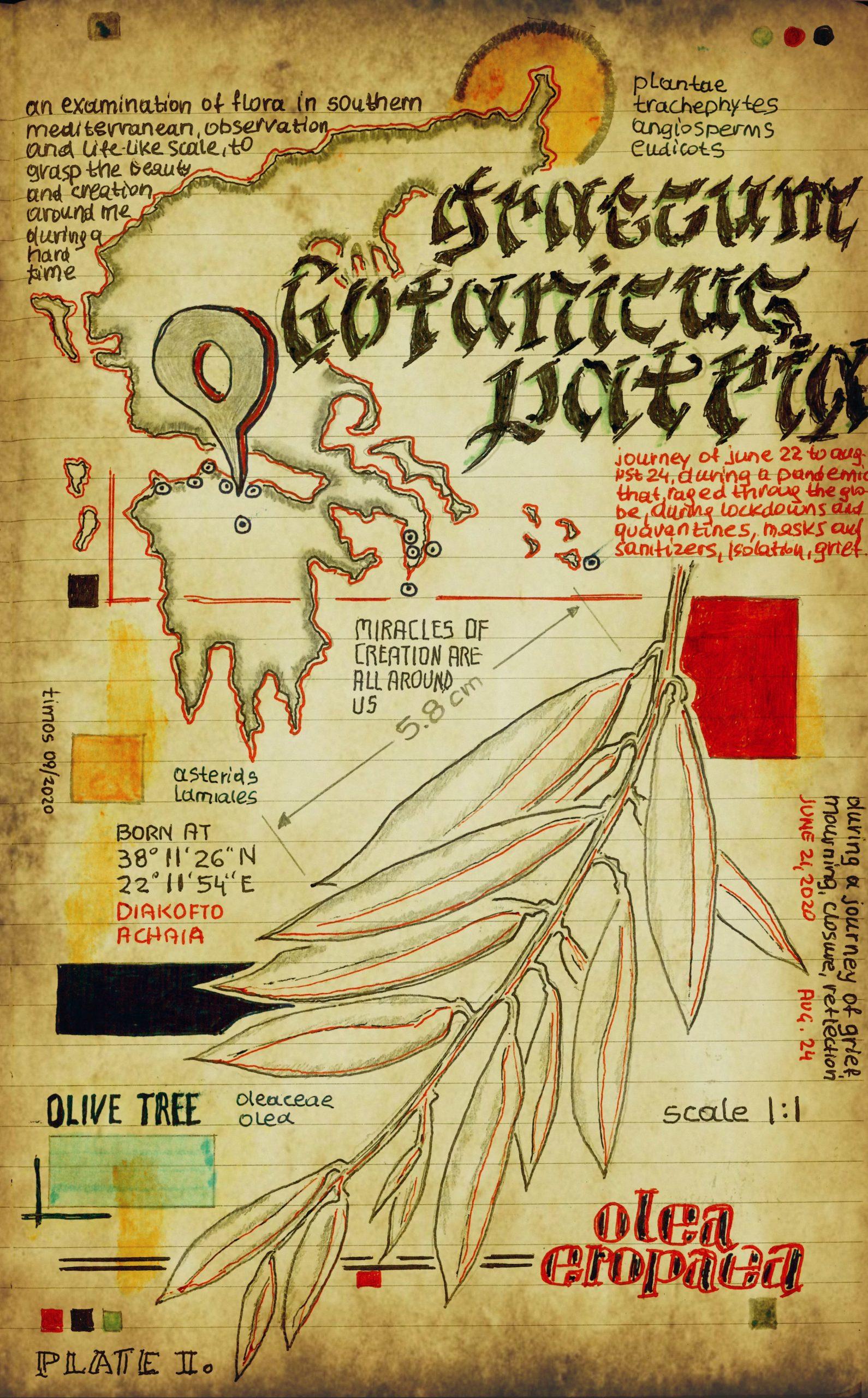 graecum botanicus patria | plate I.b