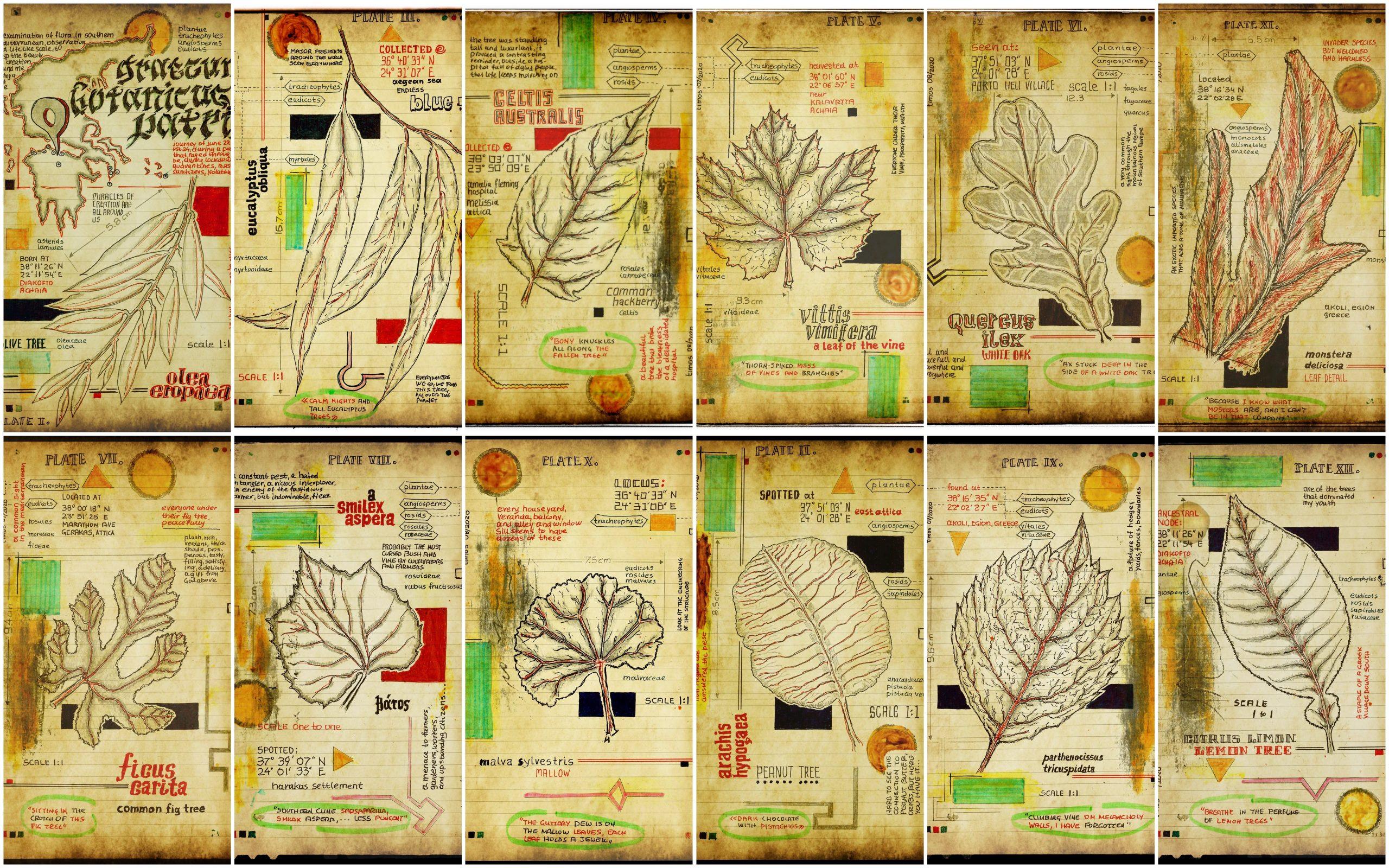 graecum botanicus patria   collage