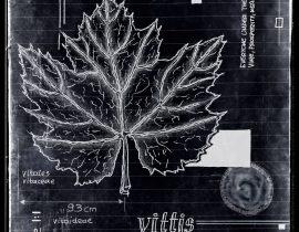 ut in arbores vivere | plate V