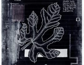 ut in arbores vivere | plate VII