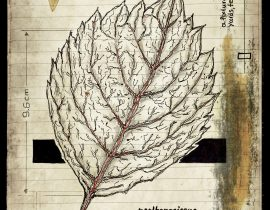 plantae patraim loci | plate IX