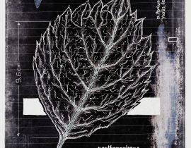 ut in arbores vivere | plate IX