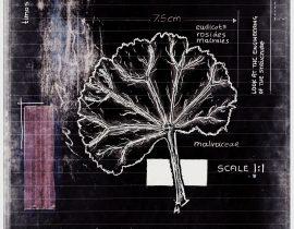 ut in arbores vivere | plate X