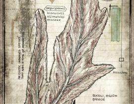 plantae patriam loci | plate XI