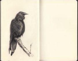 A Study of Bird 1/2