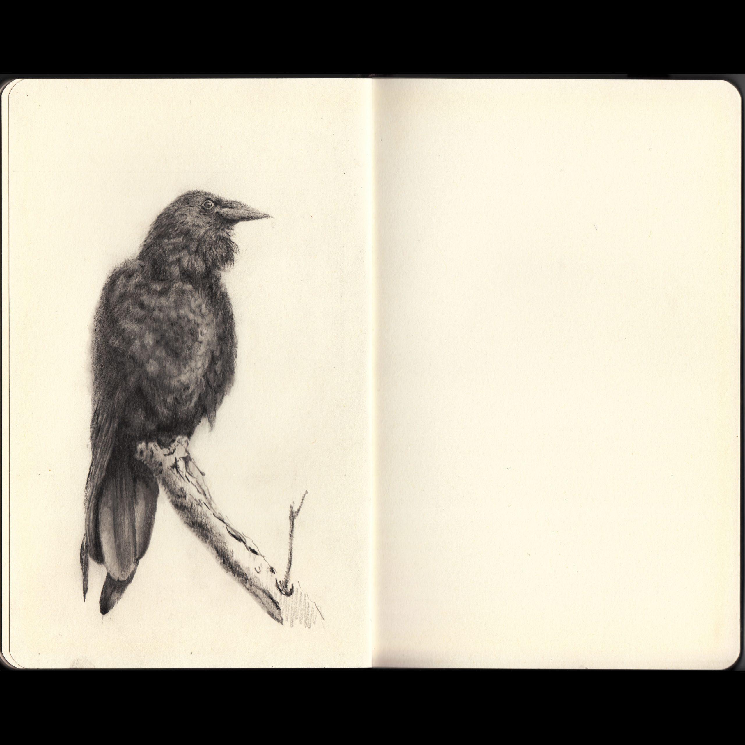 A Study of Bird 2/2