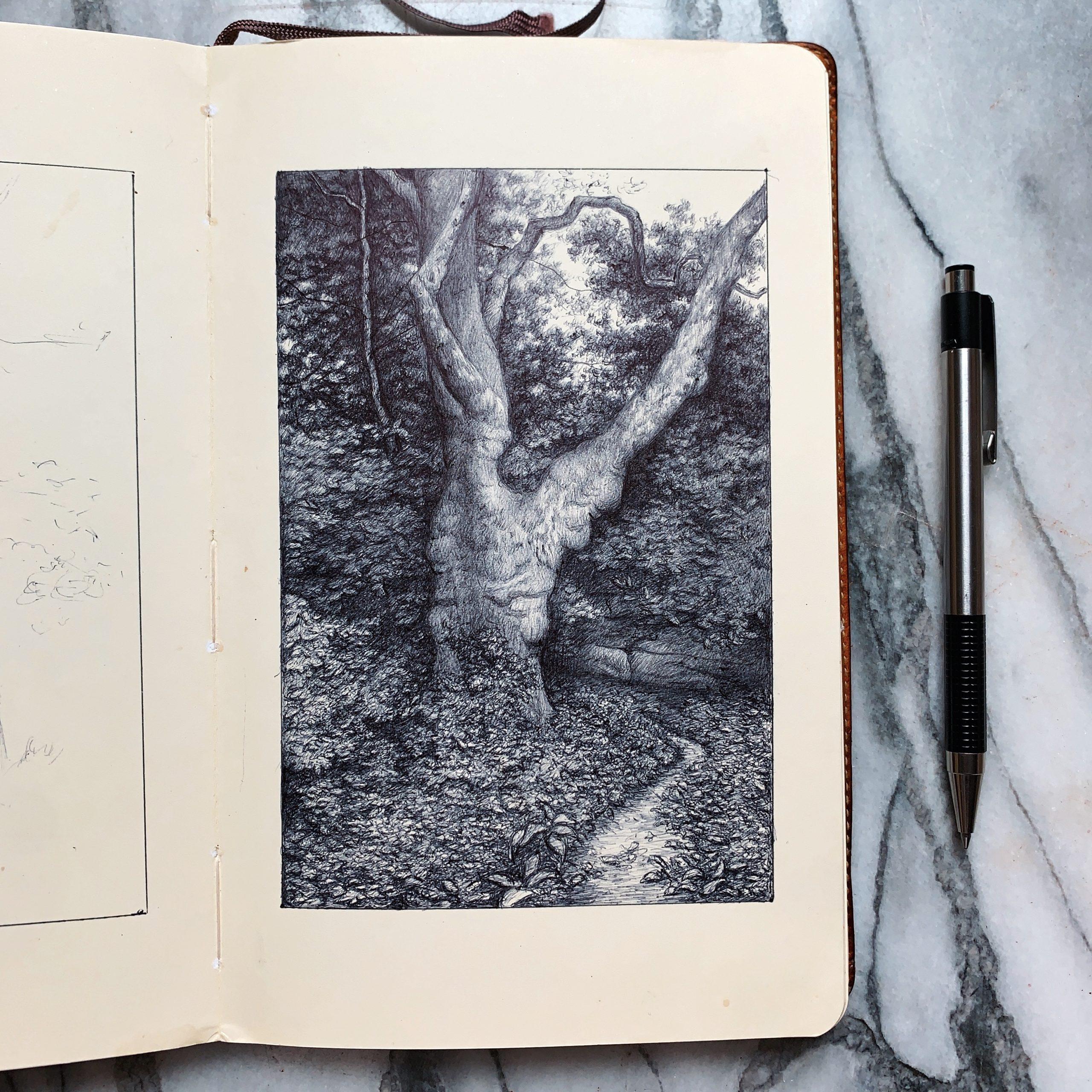 Plane Tree Study