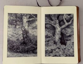 Tree portraits