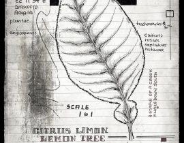 lignum vitae sustinet | plate ΧΙΙ