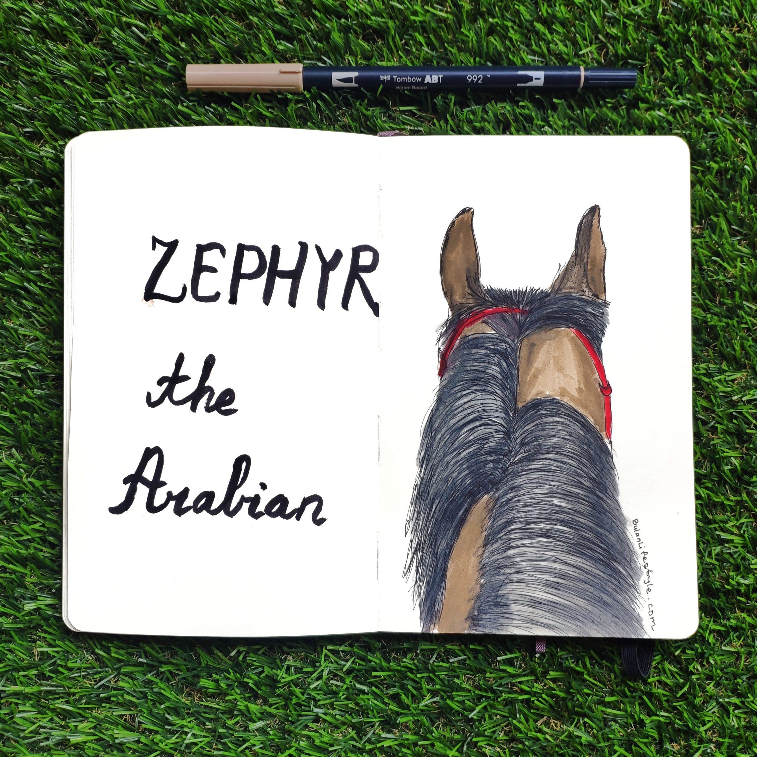 Zephyr the Arabian