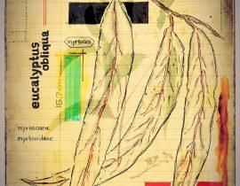 plantis et praecipuum ponebatur | plate III