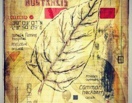 plantis et praecipuum ponebatur | plate IV