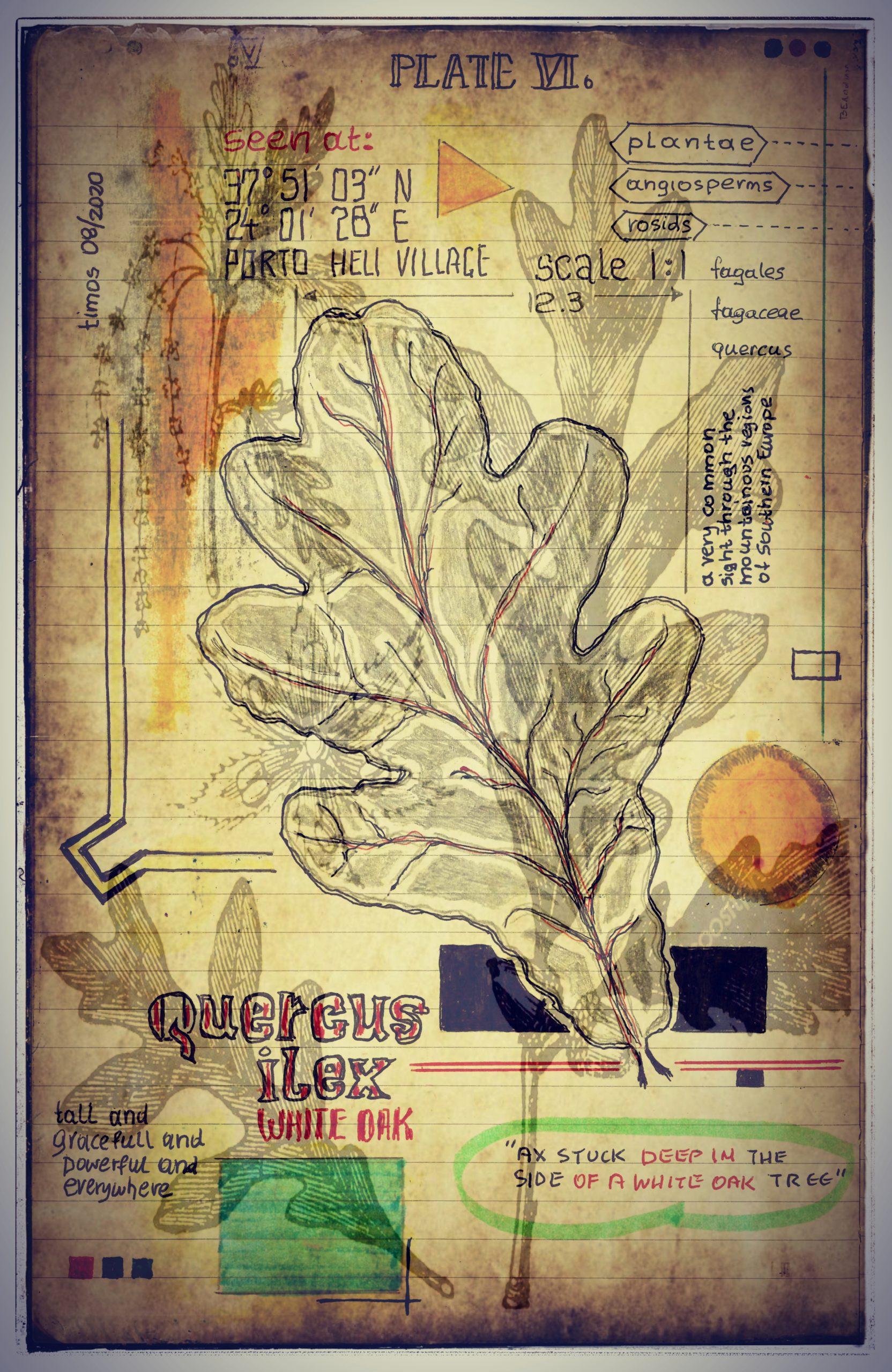 plantis et praecipuum ponebatur | plate VI