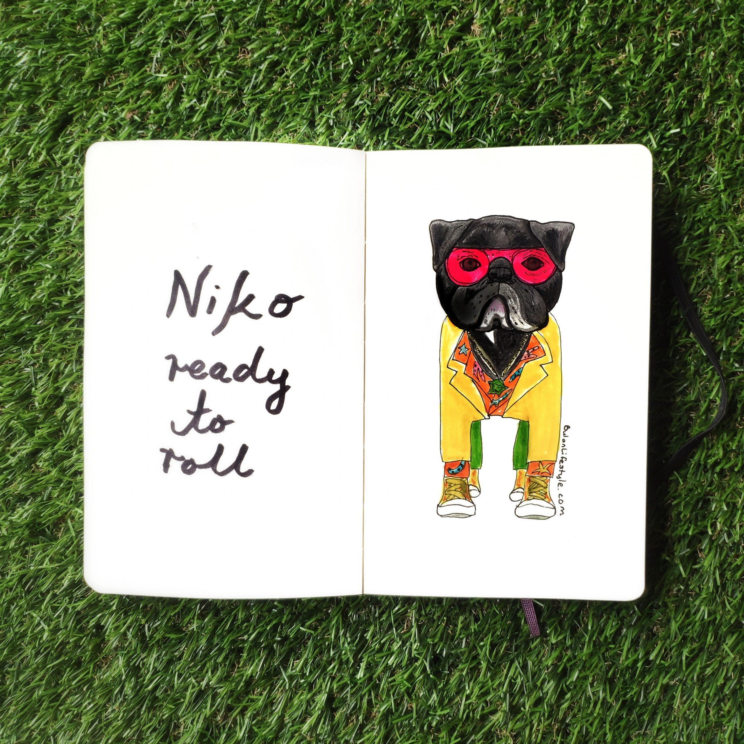 Dog fashion portrait : Niko
