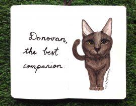 Cat portrait : Donovan