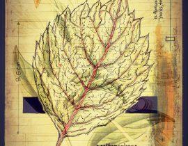 plantis et praecipuum ponebatur | plate IX